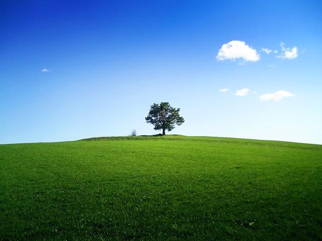 a-tree-on-the-horizon